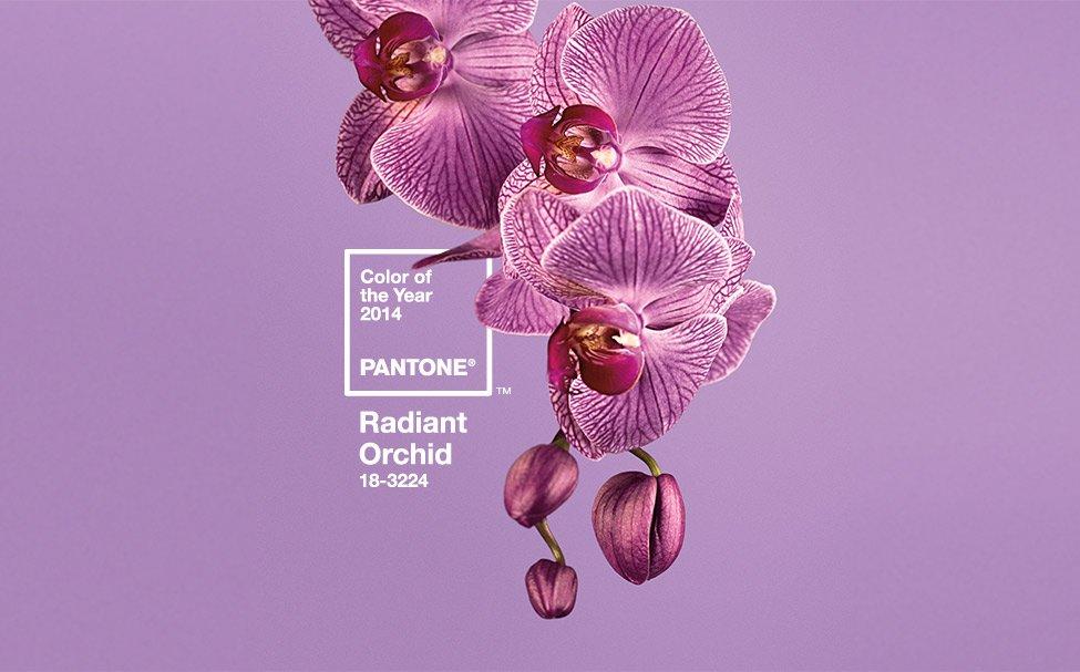 Pantone Orquidea Radiante escuela madrileña de decoración