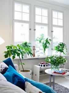 decoración plantas esmadeco